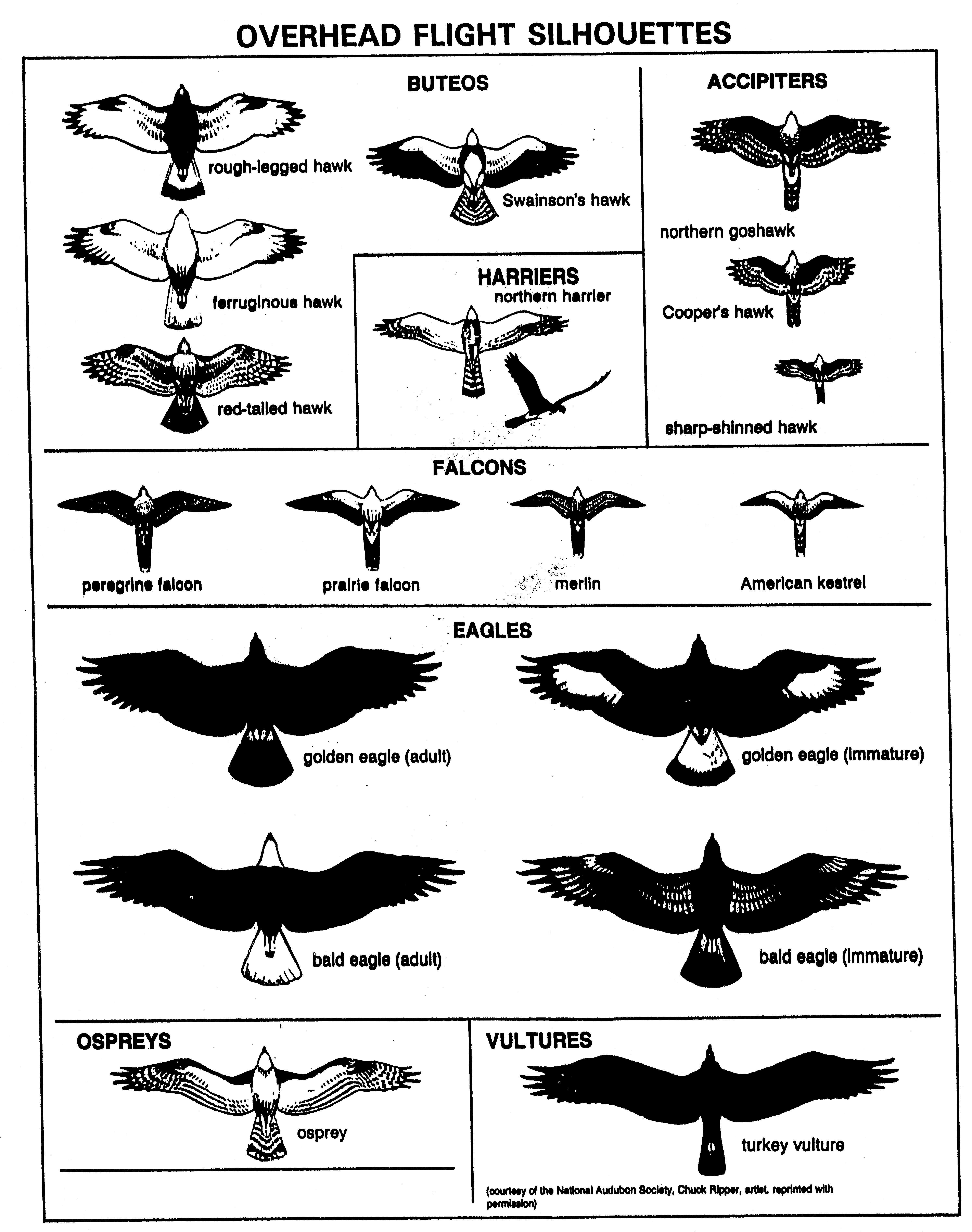 birds by dr john v richardson jr